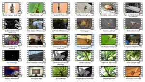 Video-Collection-3